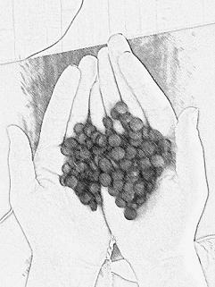 Chlorella Sketch